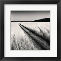 Framed Oceanside Field