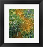 Framed Path in the Iris Garden