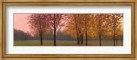 Framed Autumn Dawn, Maples