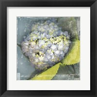 Framed Antique Bloom