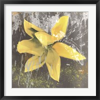 Tulip Fresco (yellow) Framed Print