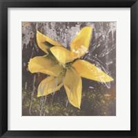 Tulip Fresco (yellow) Framed Print