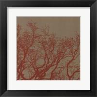 Framed Cinnamon Tree II