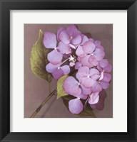 Framed Purple Hydrangea