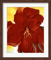 Framed Red Amaryllis, 1937