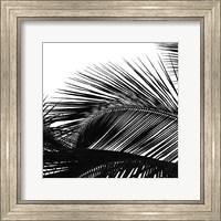 Framed Palms 13 (detail)