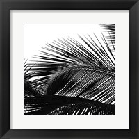 Framed Palms 13 (detail)