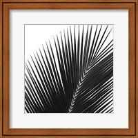 Framed Palms 14 (detail)