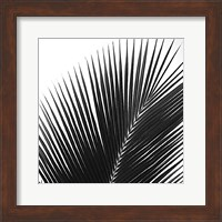 Framed Palms 14 (detail)