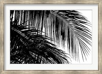 Framed Palms 3