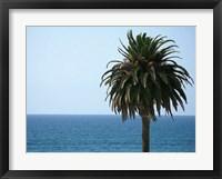 Framed Palm at Moonlight Beach