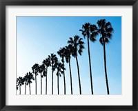 Framed La Jolla Palms