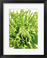 Framed Green Bloom 5