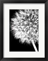 Framed Dandelion Crop