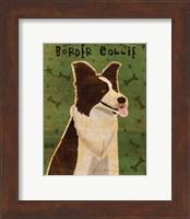 Framed Border Collie