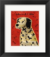 Framed Dalmation