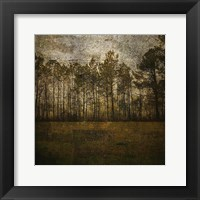 Framed Line of Pines