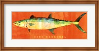 Framed King Mackerel