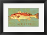 Framed Red Drum