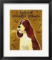 Framed English Springer Spaniel