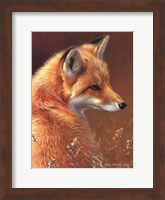 Framed Curious- Red Fox