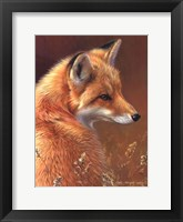 Framed Curious- Red Fox