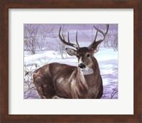 Framed Through My Window- Whitetail Deer