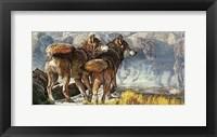 Framed Return of the Wild