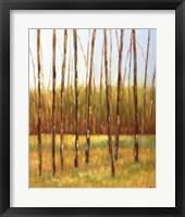 Framed Tall Trees I (left)
