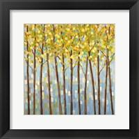 Framed Glistening Tree Tops