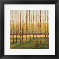 Framed Grove of Trees