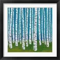 Framed Birch Grove