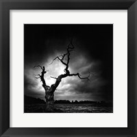 Framed Last Tree