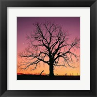 Framed Arboral Afterglow