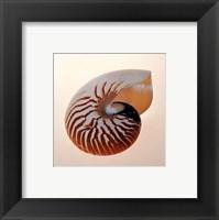 Framed Nautilus
