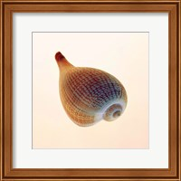 Framed Fig Shell