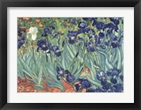 Framed Irises in the Garden