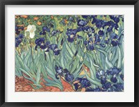 Irises in the Garden Framed Print
