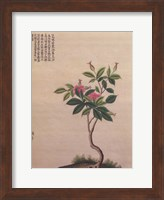 Framed Flowering Chinese Tree I