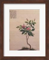 Framed Flowering Chinese Tree I