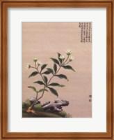 Framed Flowering Chinese Tree III