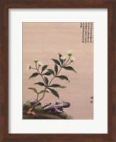 Framed Flowering Chinese Tree III