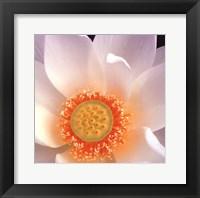 Lotus I Framed Print