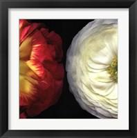 Framed Ranunculus Left