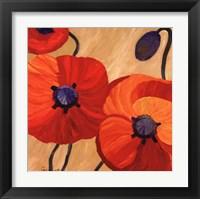 Framed Oriental Poppy L