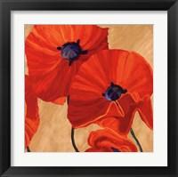 Framed Oriental Poppy R