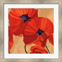 Framed Oriental Poppy R