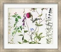 Framed Eight Studies of Wild Flowers