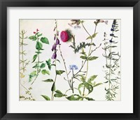 Framed Eight Studies of Wild Flowers