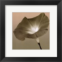 Framed Morning Glory II